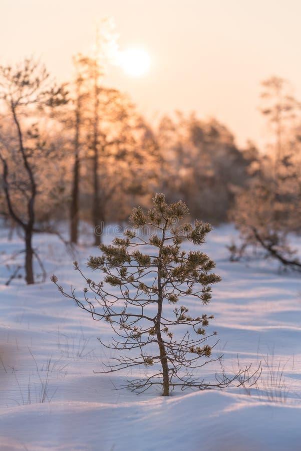 Spada liścia naturalny tło Piękny wschód słońca w zimie obraz royalty free