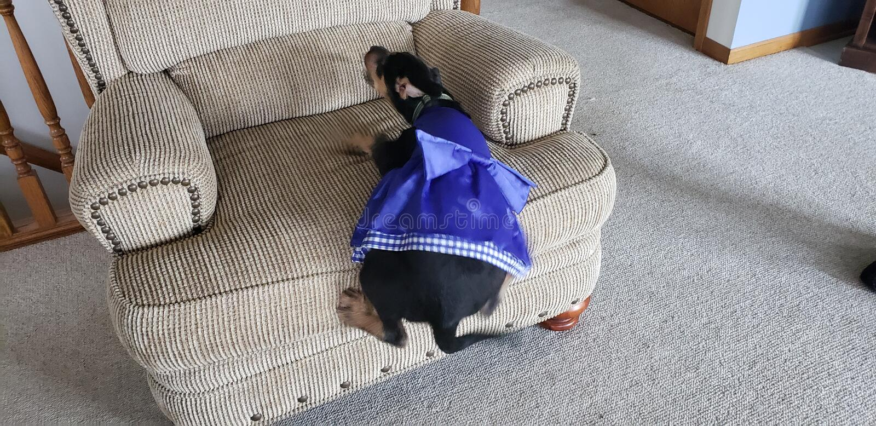 Spada pies obraz stock