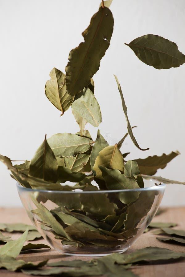 Spada podpalani liście zdjęcie stock