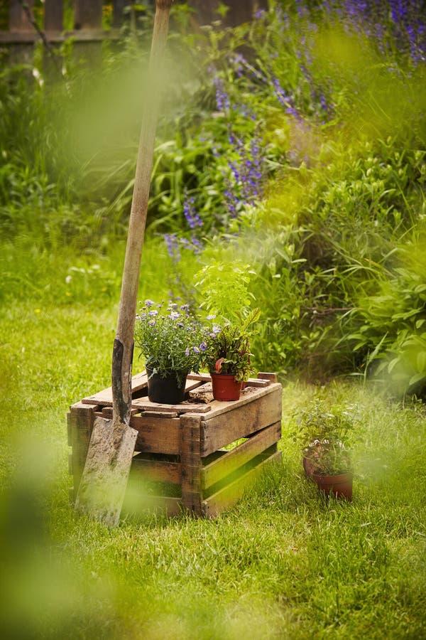 Spade för stillebenträdgårdask arkivbilder