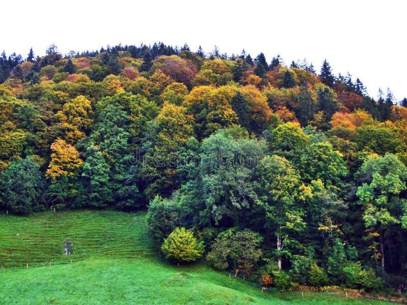 Spadek barwi w lasach Alpstein pasmo górskie i Thur rzeki dolina obraz royalty free