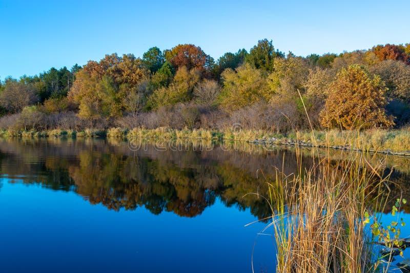 Spadek barwi z odbiciami w jeziorze i wysokiej trawie na prawym przedpolu zdjęcie royalty free