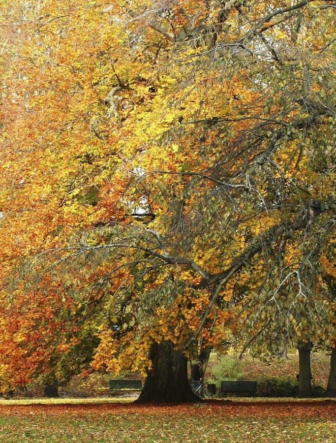 spadek drzewo obraz royalty free