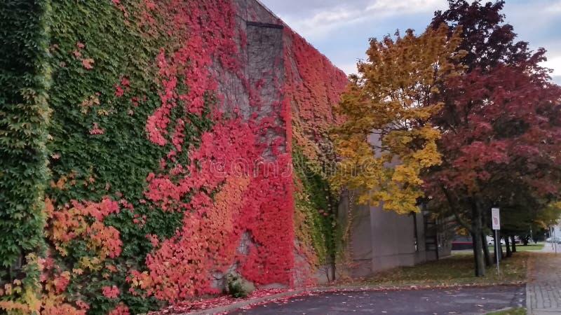 Spadek - Herbst zdjęcia stock