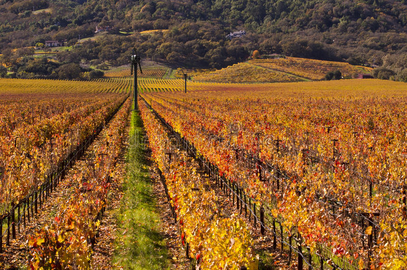 spadek napa doliny winnicy fotografia stock