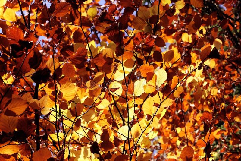 Spadek opuszcza jesień kolorów ulistnienia tło France obrazy stock