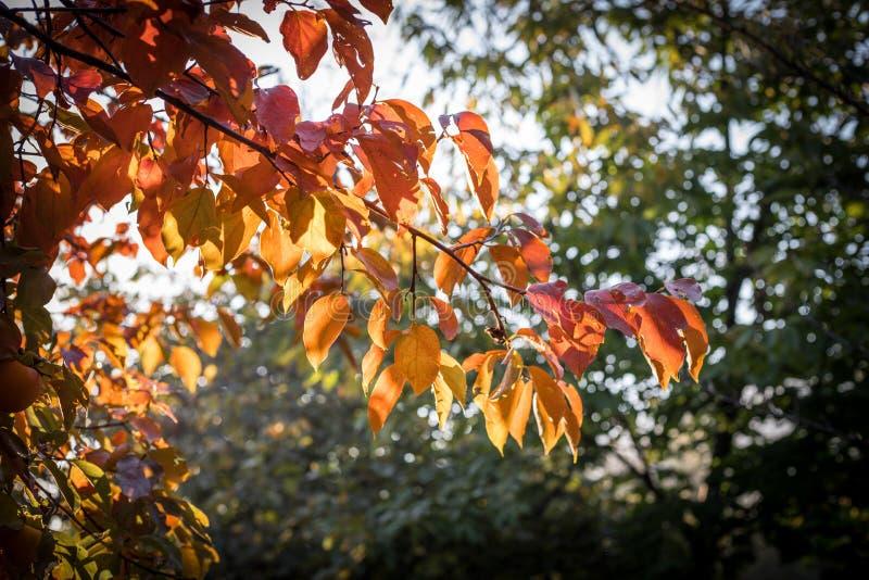 Spadek scena jesienny piękny park Liść Lasowa ścieżka w jesieni zdjęcie royalty free