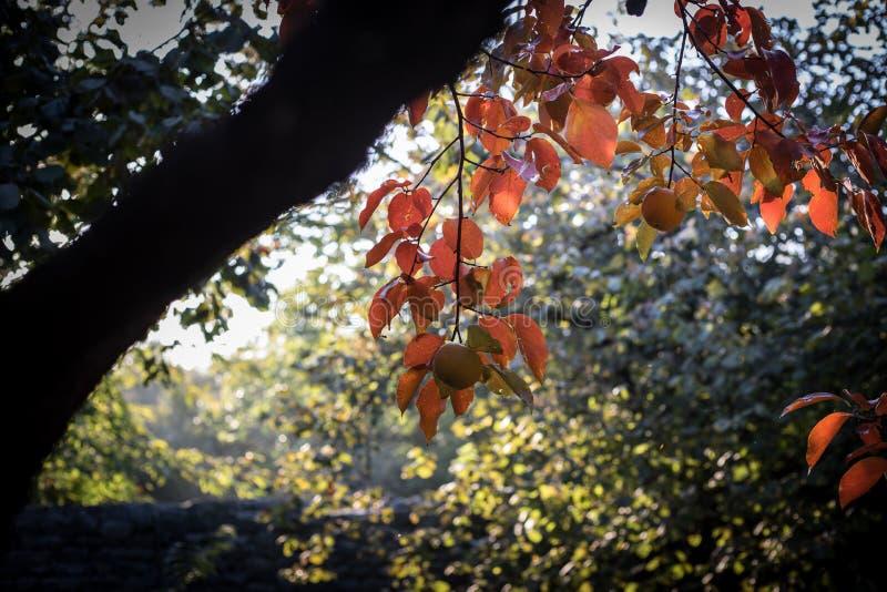 Spadek scena jesienny piękny park Liść Lasowa ścieżka w jesieni obrazy royalty free