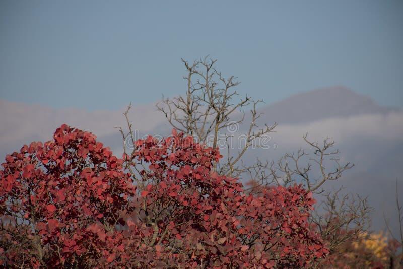 Spadek scena jesienny piękny park Liść Lasowa ścieżka w jesieni obraz royalty free