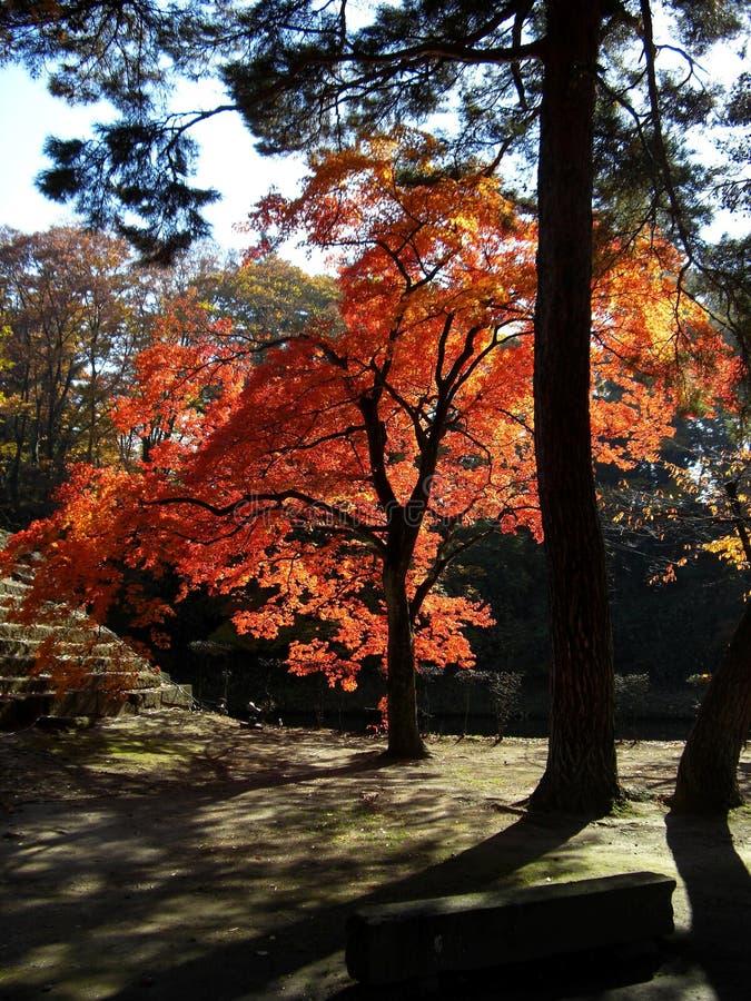Spadek w Japonia zdjęcie royalty free