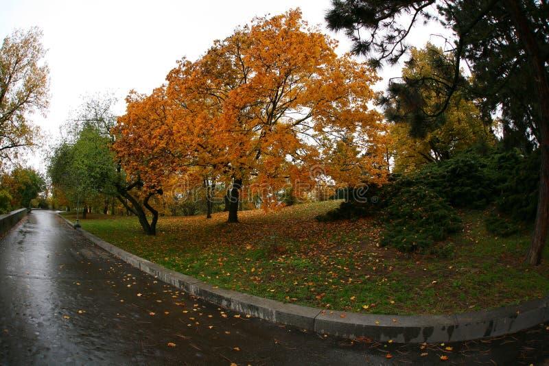 Spadek w parku fotografia royalty free