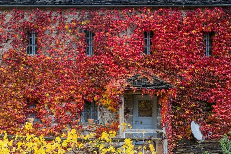 Spadków czerwoni liście wspinają się wielo- zaopatrzonego budynku fasade, pomija wi zdjęcia stock