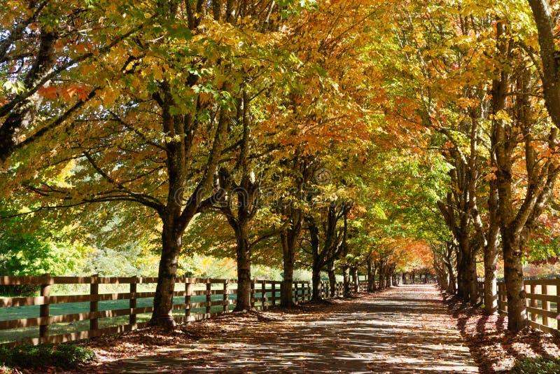 Spadków drzew linii kraju Wiejski pas ruchu obraz stock
