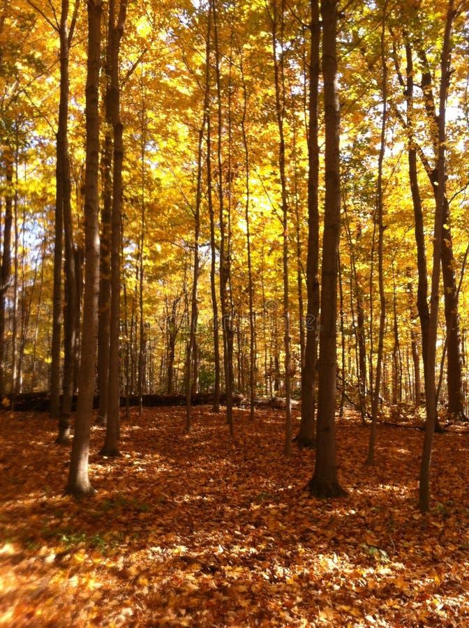 Spadków drzewa fotografia royalty free