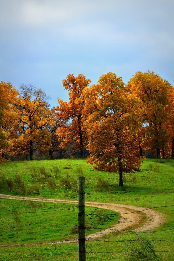 Spadków drzewa na wzgórzu zdjęcia royalty free