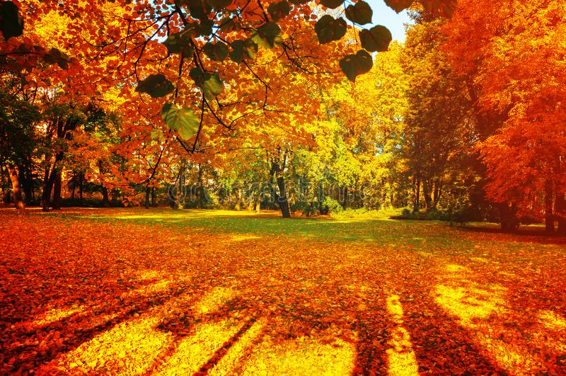 Spadków drzewa w pogodnym jesień parku zaświecali światłem słonecznym - pogodny spadku krajobraz w miękkim świetle słonecznym zdjęcia stock