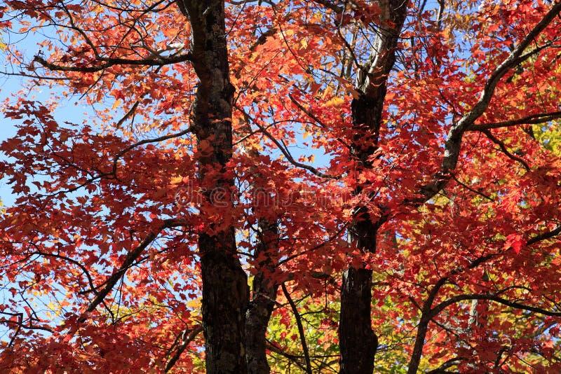 Spadków kolory wzdłuż Błękitnego grani Parkway fotografia royalty free