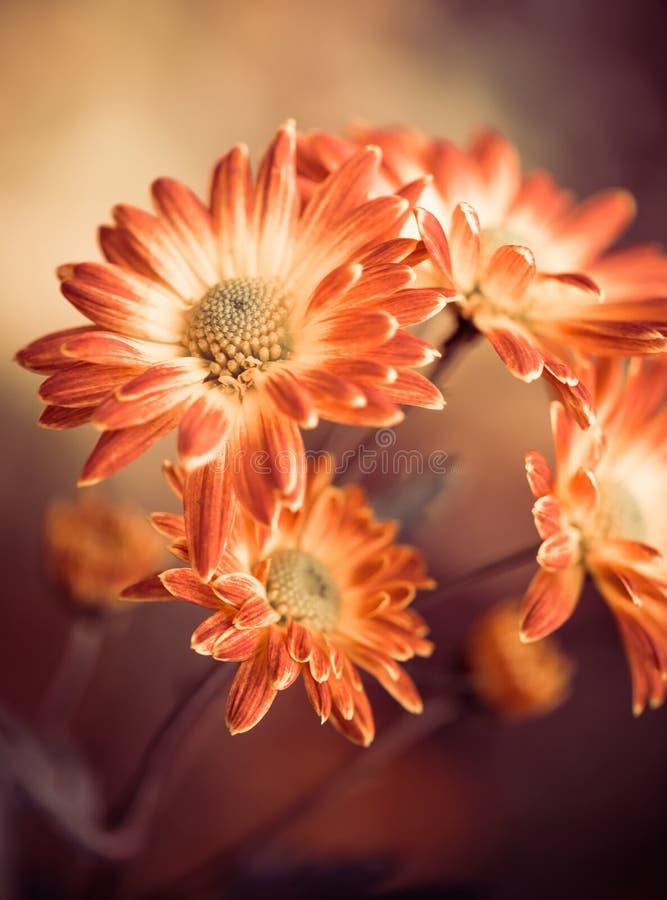 Spadków kwiaty zdjęcie royalty free