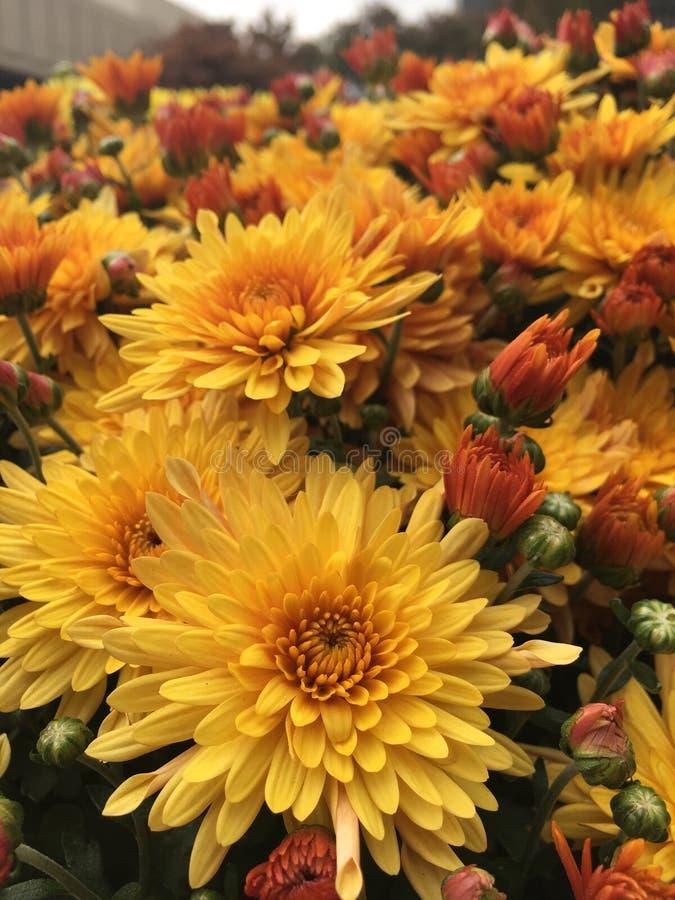 Spadków kwiaty zdjęcia royalty free