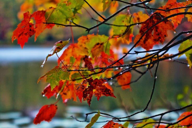 Spadków liście zdjęcie stock