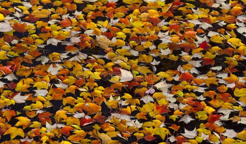 Spadków liście jako tło zdjęcia stock