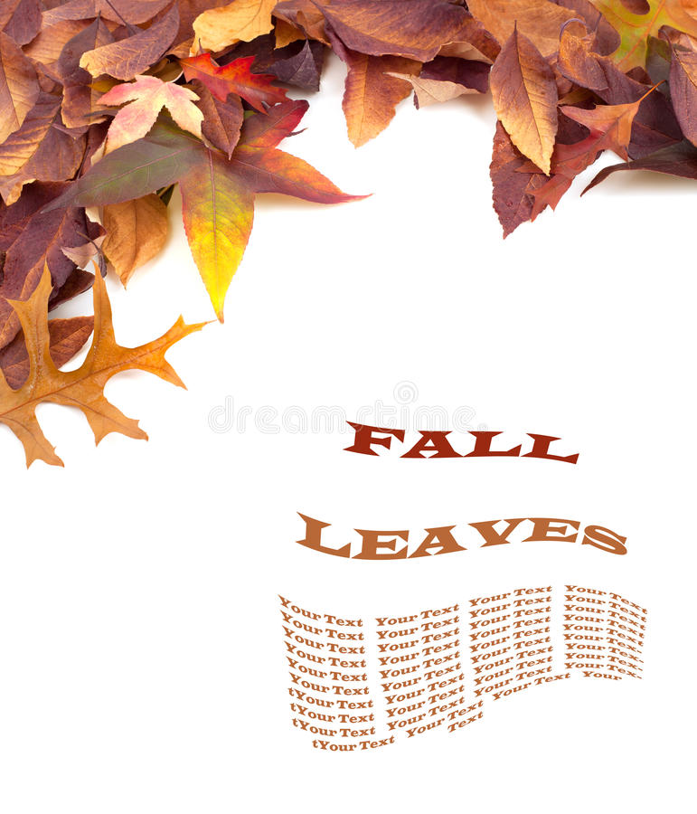 Spadków liście na Białym tle z Copyspace lub pokój przestrzeni dla Twój teksta lub słów, Pionowo zdjęcia stock