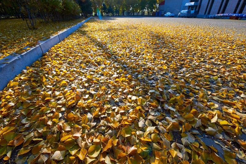 Spadków liście na ziemi zdjęcia royalty free