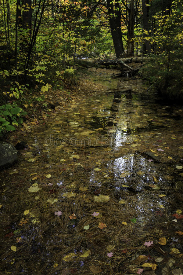 Spadków liście odbija w strumieniu zdjęcie stock