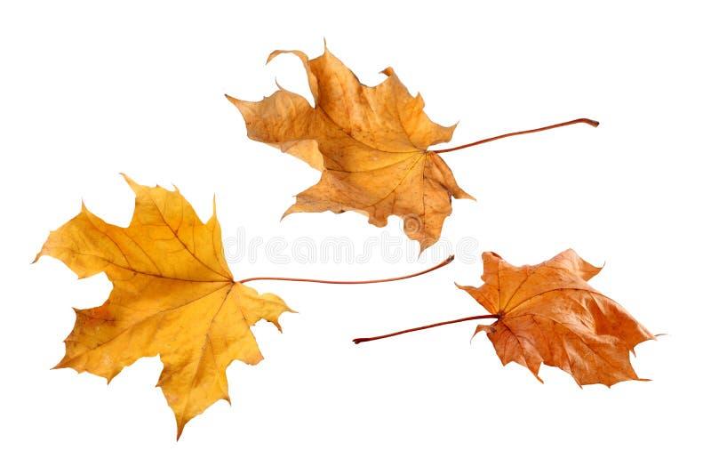 Spadków liście odizolowywający na białym tle zdjęcia royalty free