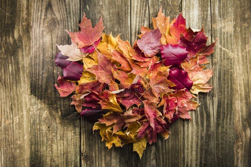 Spadków liście w kształcie serce obraz royalty free