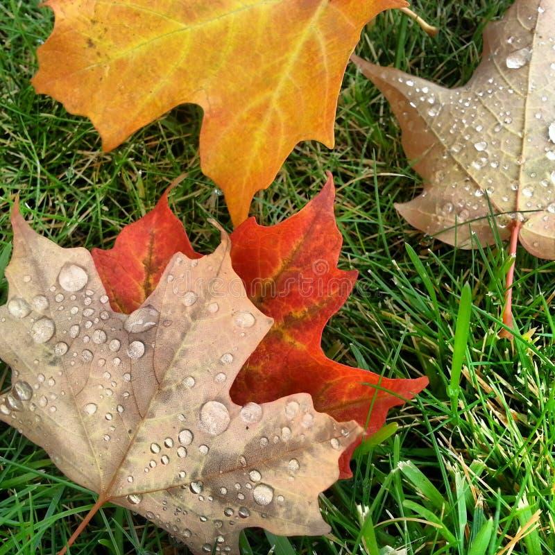 Spadków liście w rosie obraz stock