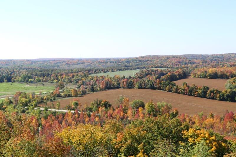 Spadków pola Z Lasowym obdzierganiem zdjęcie stock