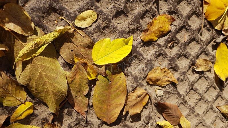 Spadku żółty liść na stosie wysuszony brąz opuszcza obraz royalty free