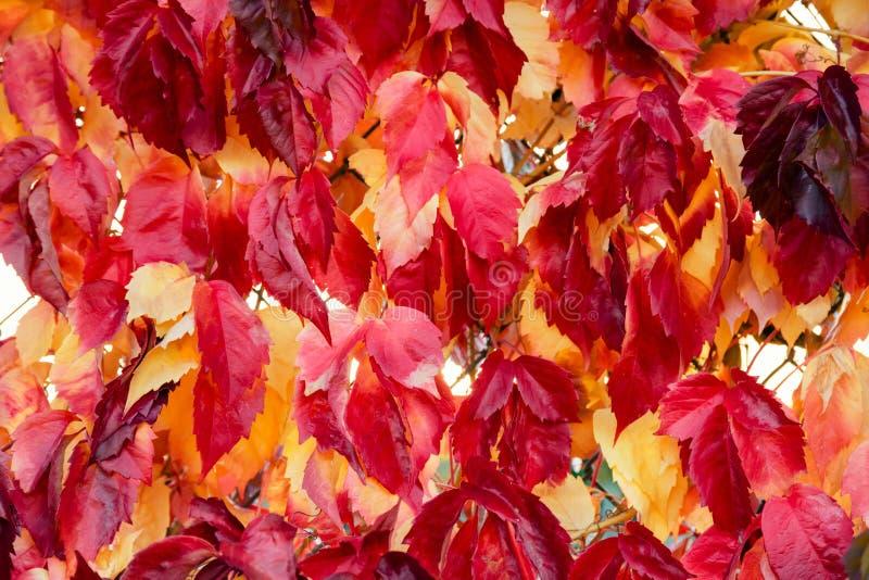 Spadku drzewa liści tło ilustracja wektor