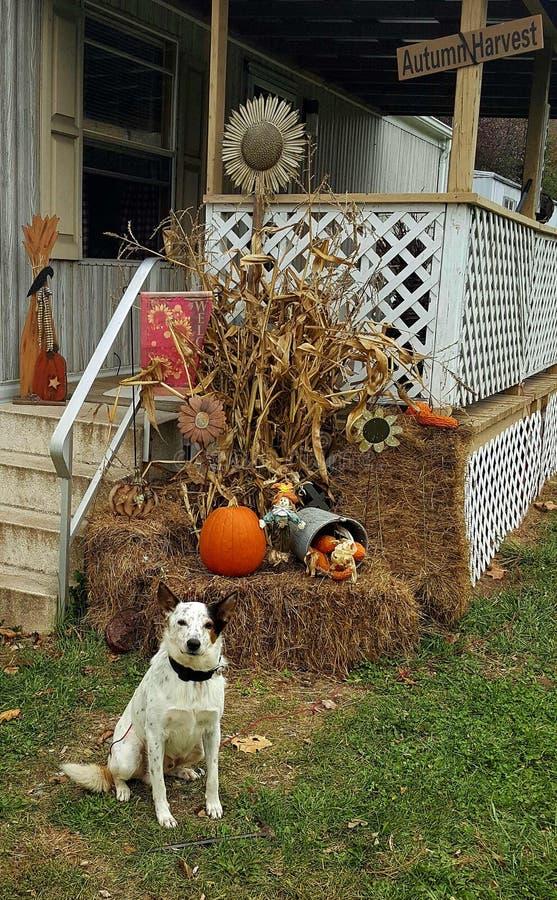 Spadku Halloweenowy pokaz zdjęcie royalty free