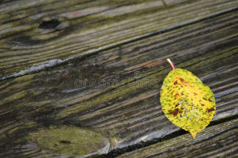 Spadku kolor żółty fotografia stock