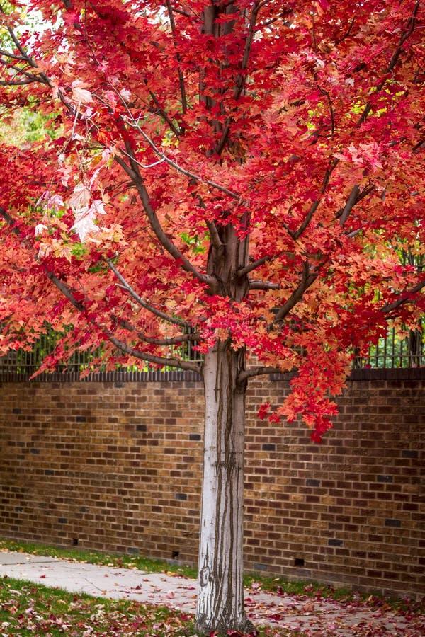 Spadku kolor w mieście zdjęcia royalty free