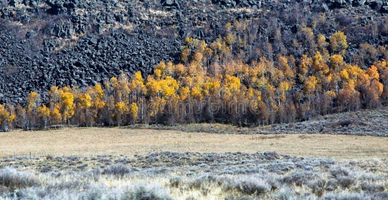 Spadku krajobraz w Wyoming zdjęcie royalty free