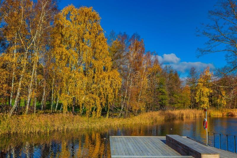 Spadku krajobraz z jaskrawymi żółtymi drzewami odbija w błękitnym lak obrazy royalty free
