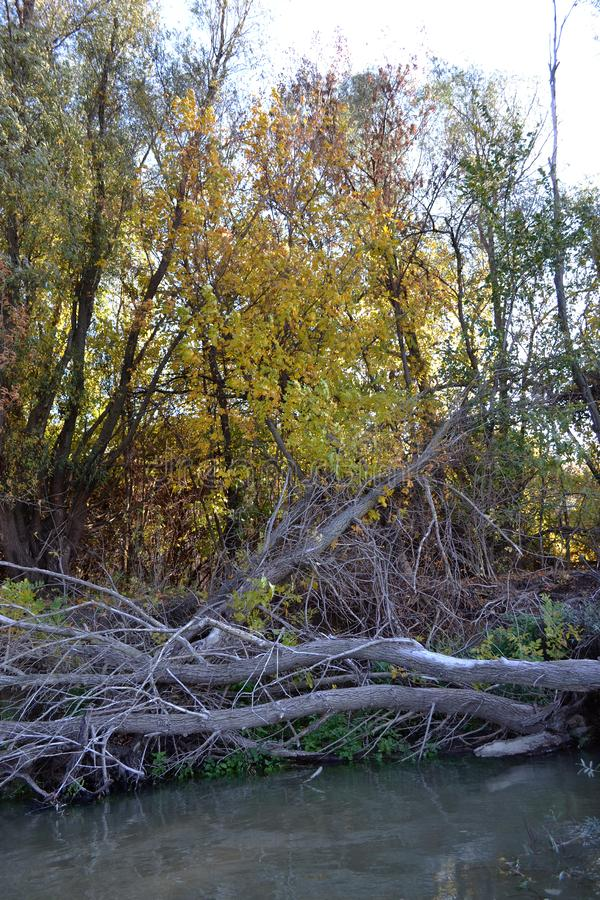 Spadku las na bankach Danube rzeka 1 zdjęcia royalty free