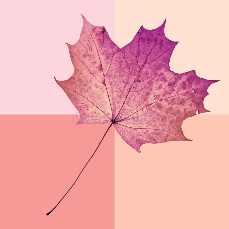 Spadku liścia klonowego tło w rocznika stylu Jesień przyjeżdża Fantazi kolorowy tło zdjęcia royalty free