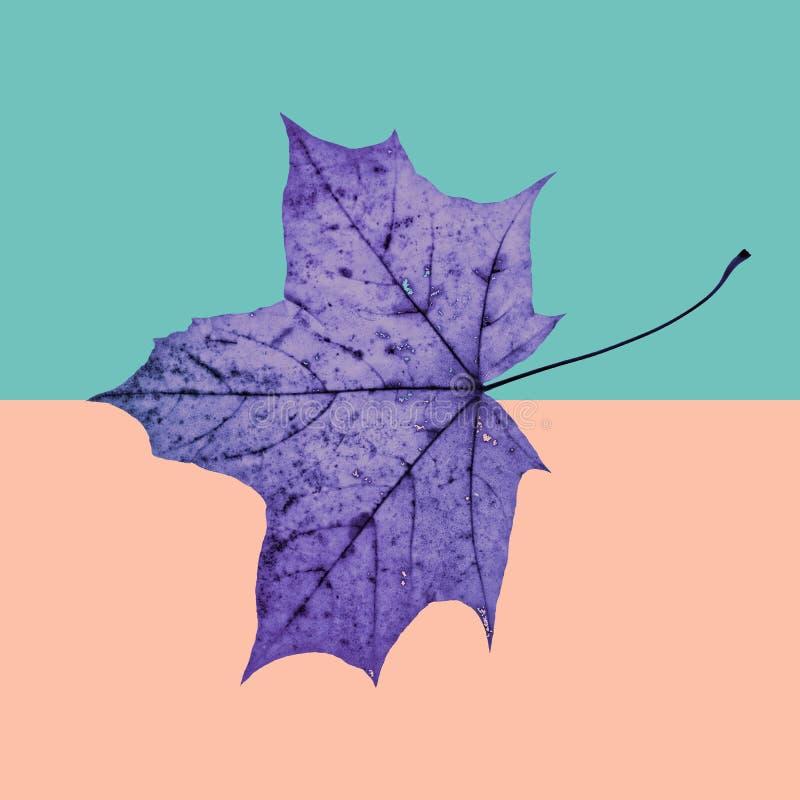 Spadku liścia klonowego tło w rocznika stylu Jesień przyjeżdża Fantazi kolorowy tło zdjęcie stock
