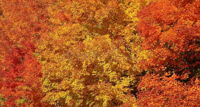 Spadku liścia kolor w Ontario na słonecznym dniu zdjęcia stock