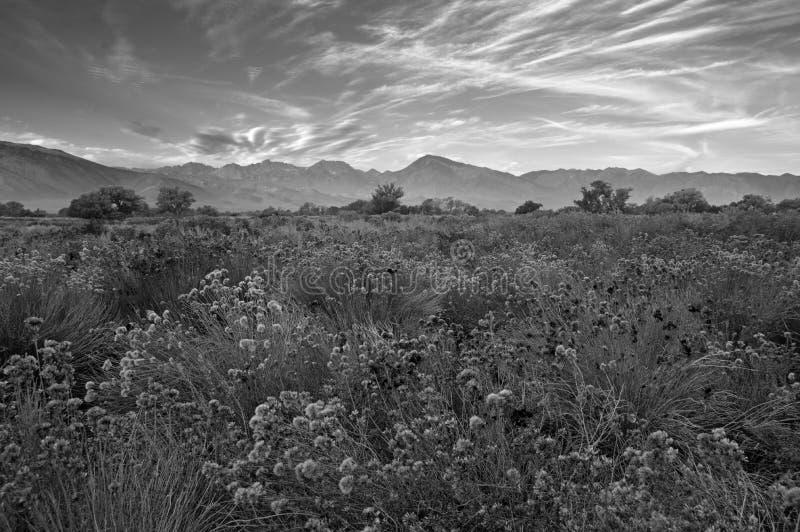 Spadku Owens doliny ranek zdjęcia royalty free