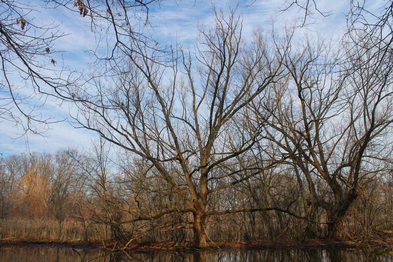 Spadku pogodowy drzewo fotografia royalty free