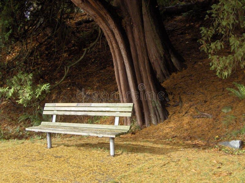 Spadku popołudnie w parku obrazy royalty free