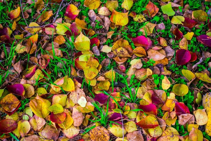 Spadku ulistnienia liście spadają ziemia z zieloną trawą zdjęcia royalty free