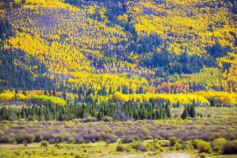 Spadku ulistnienie Kolorado obraz stock