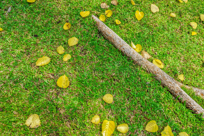 Spadku ulistnienie na zielonym gazonie zdjęcie royalty free