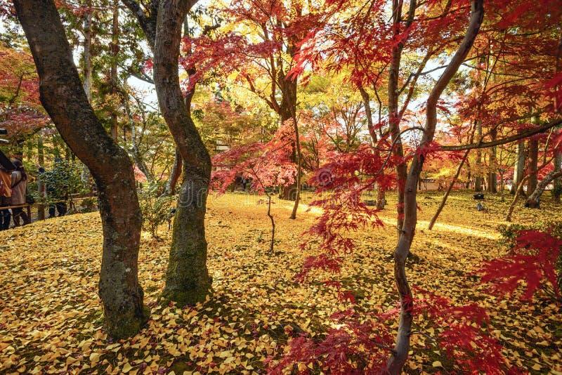 Spadku ulistnienie w Kyoto obrazy stock